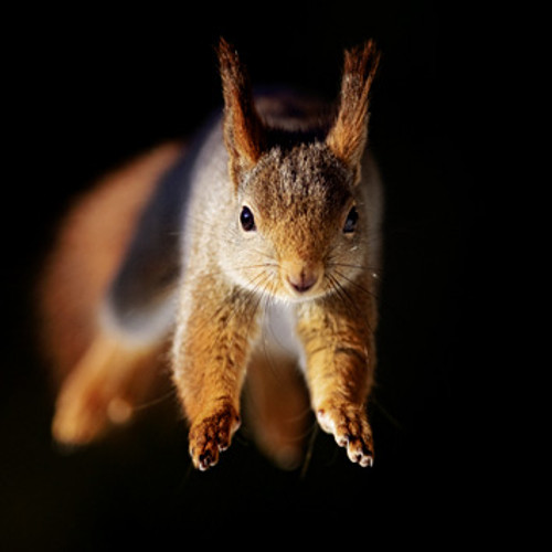 WT91321 - Red Squirrel (1 blank card)~
