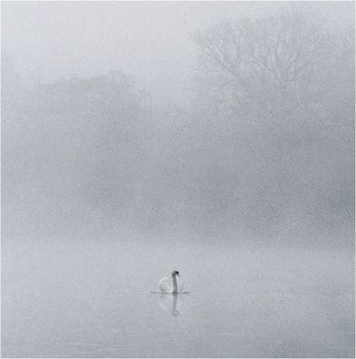 SM14205 - Swan & Mist (1 blank card)