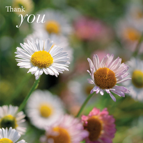 SM14183T - Daisies (1 thank you card)