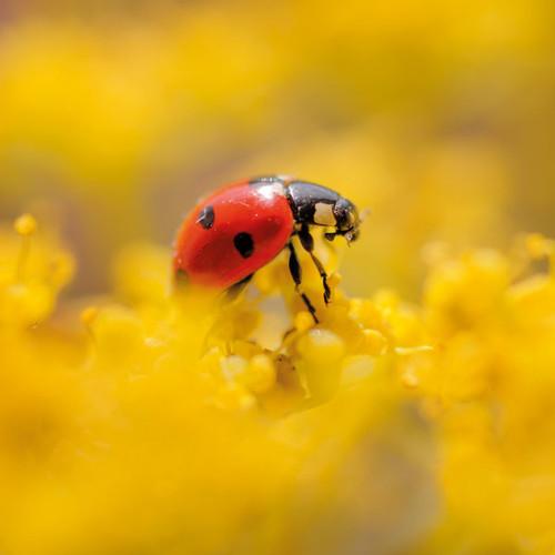 NE91079B - TWT Seven-spot Ladybird (1 pack of 5 notelets)~
