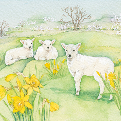 SG37004E - Spring Lambs (Easter notelet packs of 5 cards)~
