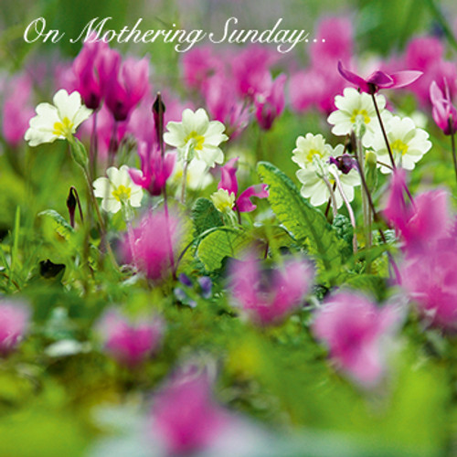 E10539MD - Primroses and Cyclamen (1 mother's day card)~