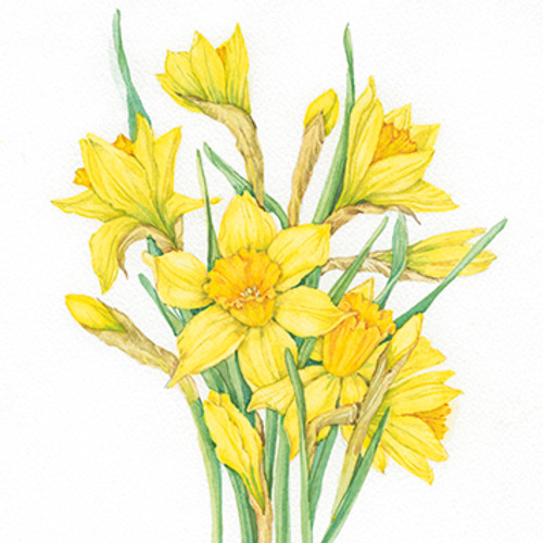 SG37005MD - Daffodils (1 mother's day card)~