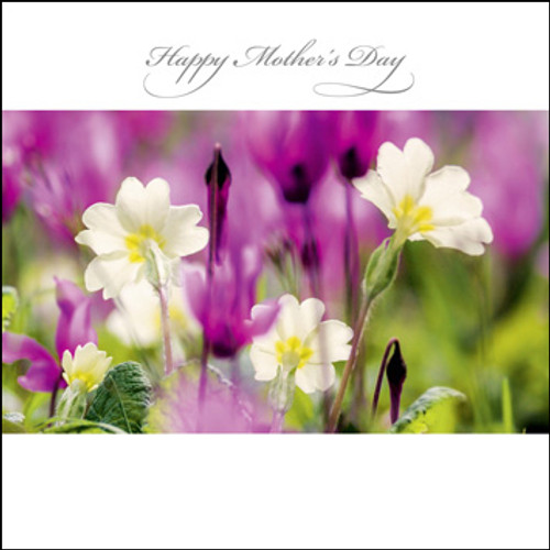 SM14001MD - Primroses and Cyclamen (1 mother's day card)~