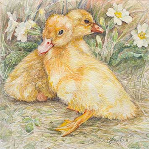 M34008 - Duckling and Gosling (1 blank card)~