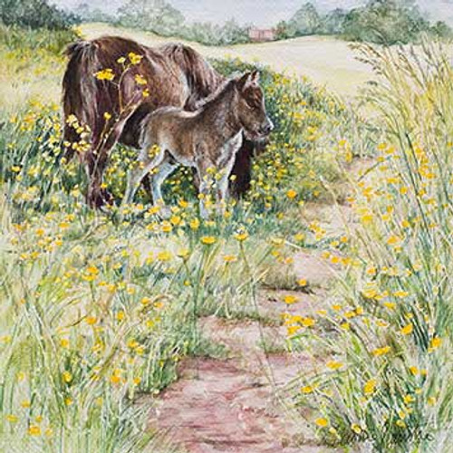 M34009 - Donkeys and Buttercups (1 blank card)~