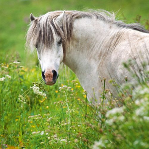 E10569 - Pony in the Meadow (1 blank card)~