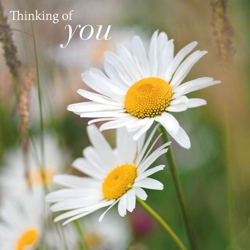 SM14226Y - Daisies (1 thinking of you card)