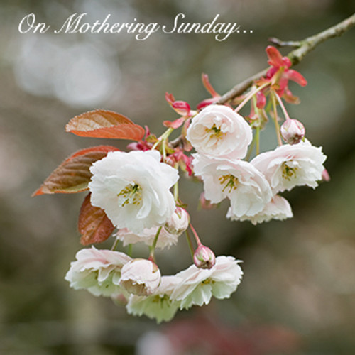 E10514MD - Cherry Blossom (1 mother's day card)~