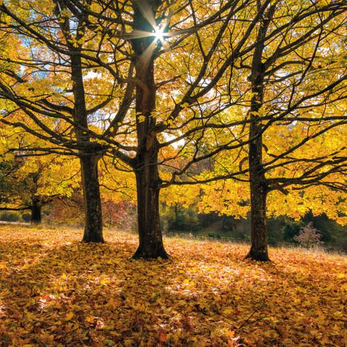 SM14228 - Autumn's Glow (1 blank card)