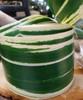 "Variegated Green & Cream 4.25"" Aspidistra Ti Leaf Ribbon"