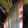 Metallic Rose Gold and Green Aspidistra Leaf Ribbon