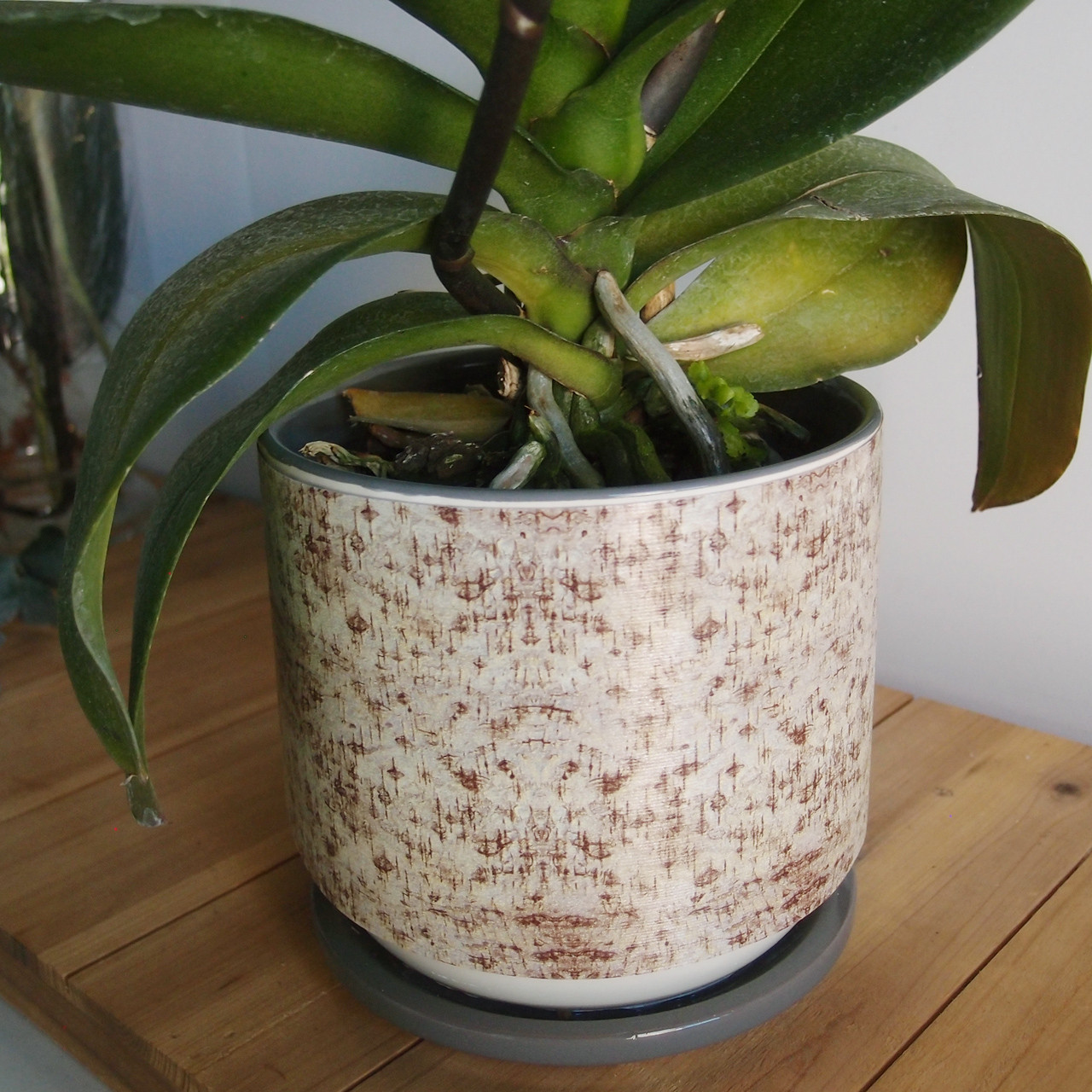 Birch Bark Aspidistra Leaf Ribbon