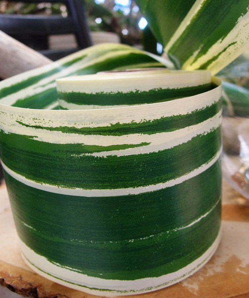 "Variegated Green & Cream 4.25"" Aspidistra Ti Leaf Ribbon"