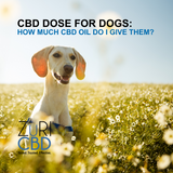 CBD for Dogs: How Much CBD Oil Do I Give Them?