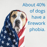 ​CBD for Dogs: Firework Anxiety