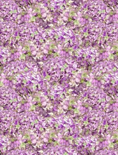 Hydrangea Dreams - Packed Hydrangeas Purple