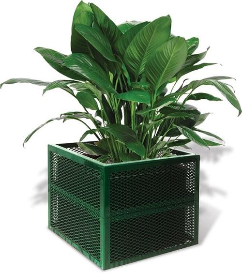 plantericonnn.jpg