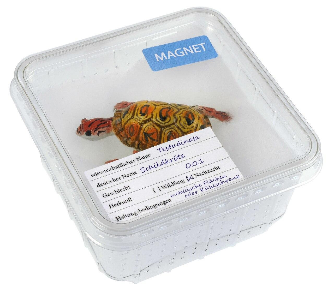 All Things Reptile Magnet Turtle in Cricket Box