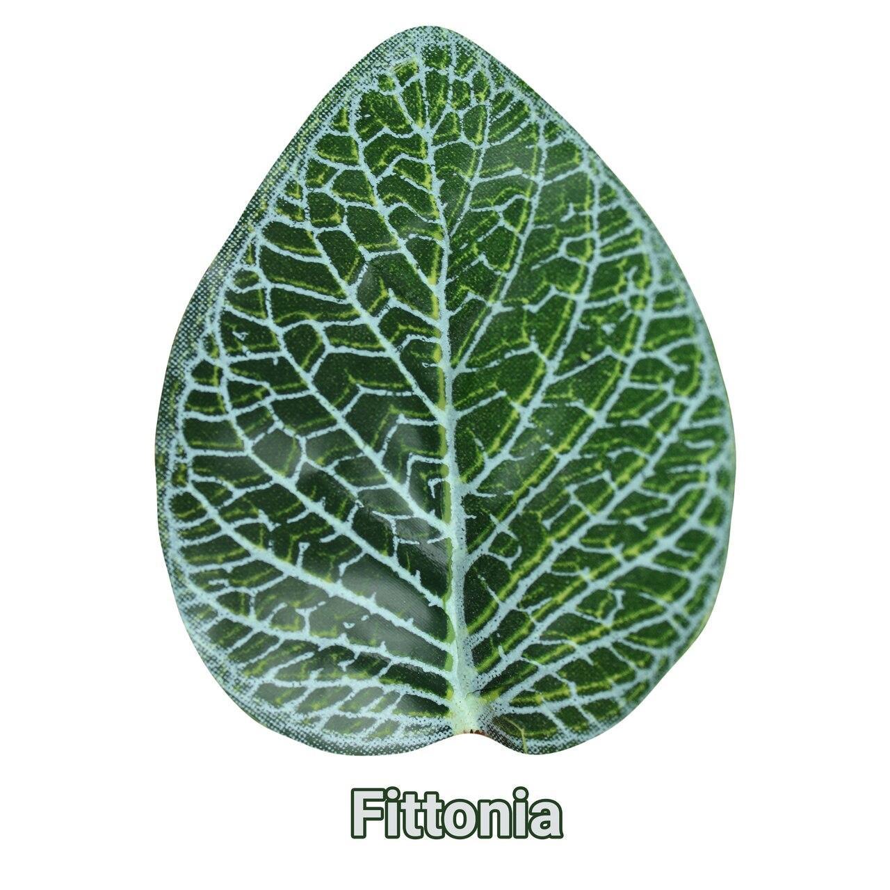 Pangea Pangea Hanging Bush 18 in Fittonia