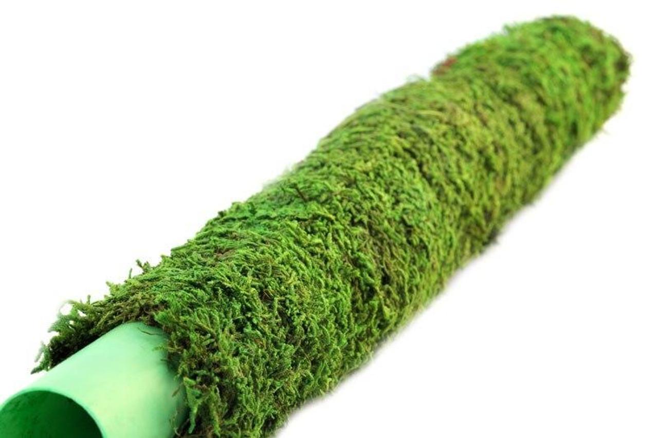 Galapagos Galapagos Moss Poles 24