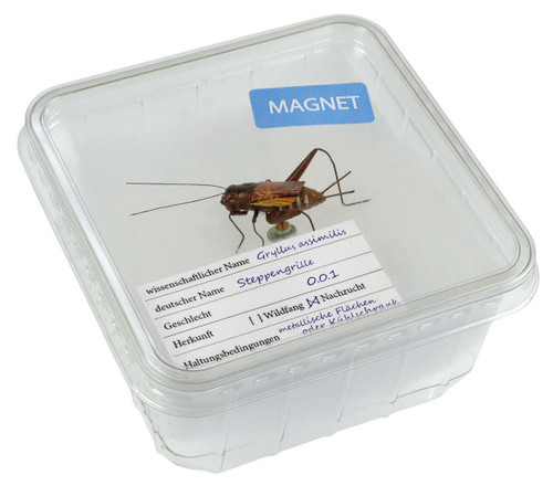 All Things Reptile Magnet Cricket in Cricket Box