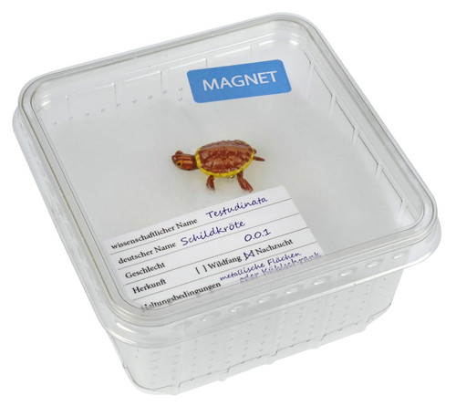 All Things Reptile Magnet Turtle Small in Cricket Box