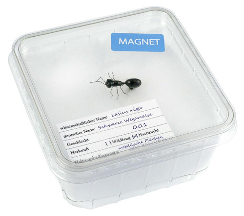 All Things Reptile Magnet Ant in Cricket Box