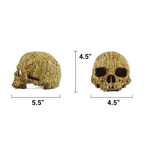 Pangea Pangea Human Skull Cave