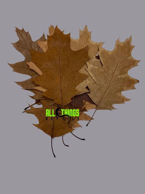 All Things Reptile ATR Natural Oak Leaf Litter 16 Pack