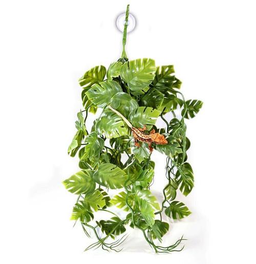 Pangea PANGEA PLANTS - GREEN