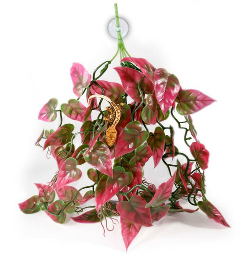 Pangea PANGEA PLANTS - RED
