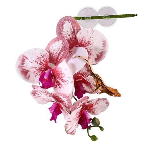 Pangea PANGEA HANGING ORCHIDS - WHITE