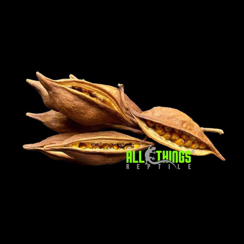All Things Reptile ATR Brach Pod 5 per Pkg Approx 2-5