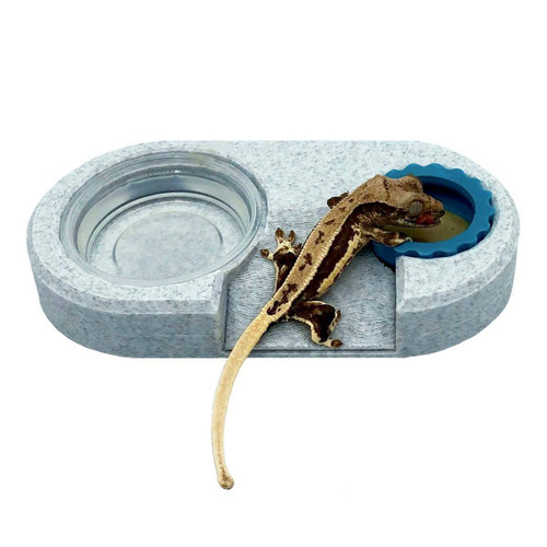 ReptilesRuS Dual Feeding Cup Holder Ramped Charitable Donation