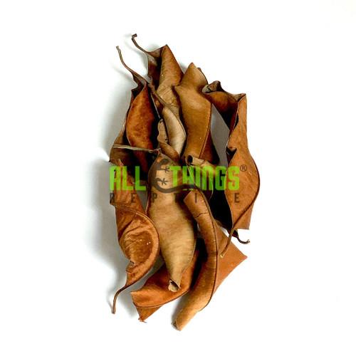 All Things Reptile Kiri Palu Mix Size Leaves 10-pack