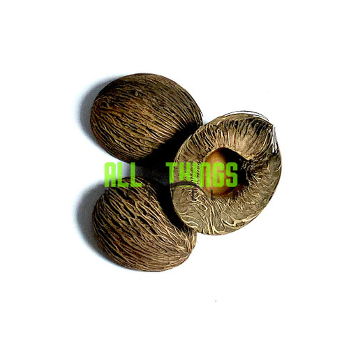 All Things Reptile Mintolla Ball SM Dried Seeds 3-pack