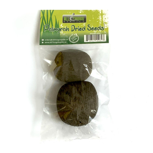 All Things Reptile Palmyrah Dried Seeds 2-pack