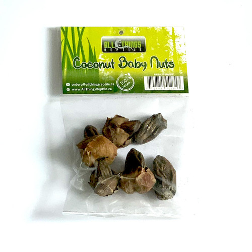 All Things Reptile Coconut Baby Nuts 5-pack