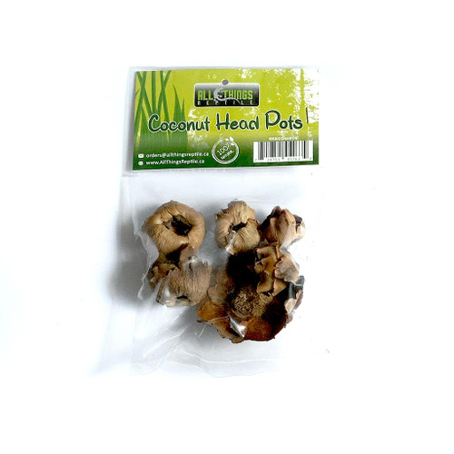 All Things Reptile Baby Coconut Head Pot 6-pack