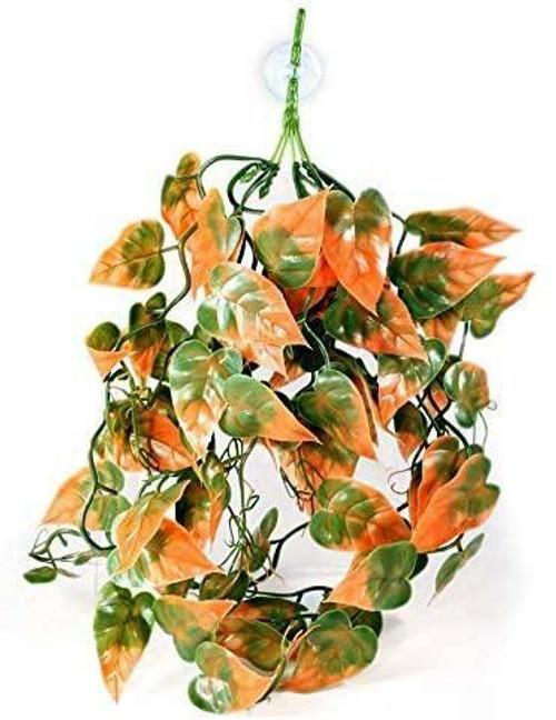 Pangea PANGEA PLANTS - Orange