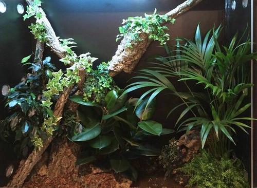 Arcadia Arcadia 9w LED Jungle Dawn E27