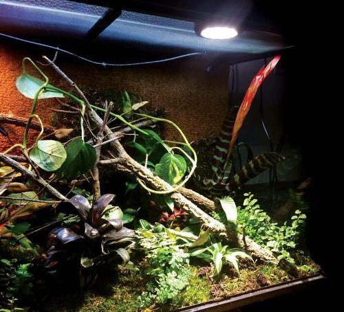 Arcadia Arcadia 40w LED Jungle Dawn E27 Spot