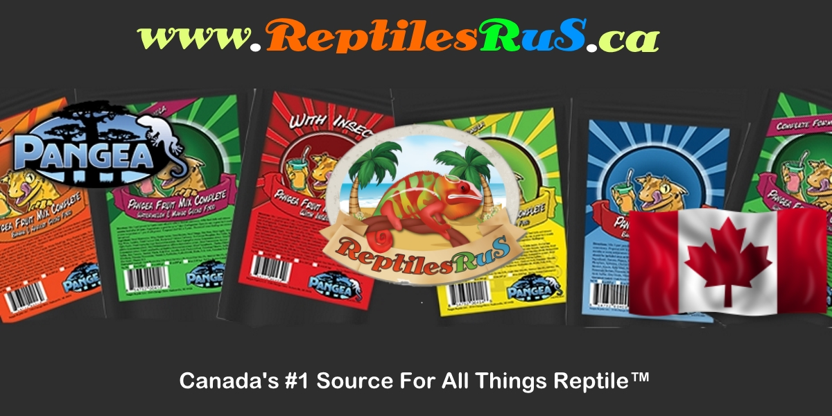 Reptilesrus Canada S 1 Source For All Things Reptile