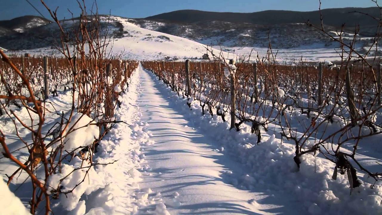 January Sale: Dessert Wines
