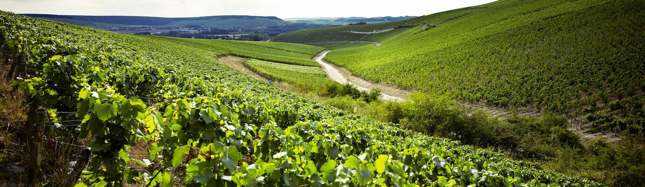Domaine Louis Michel Fine Wine