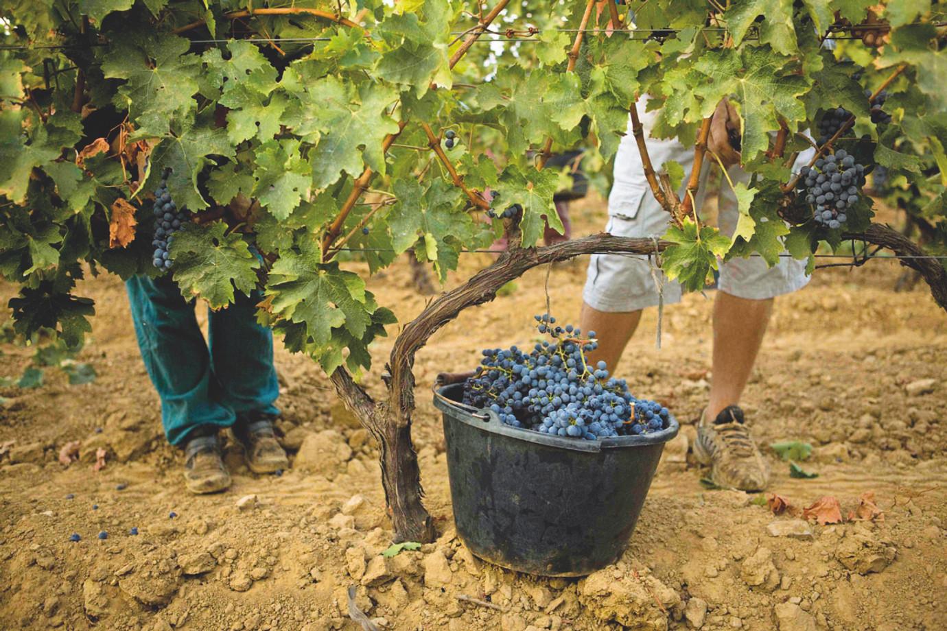 Kind Wines