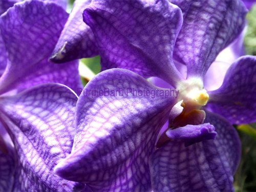 Orchid Artwork