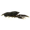 Tackle HD 375-006 Hi-Def Craw 1390-0613