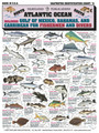 Tightlines 00010 Fish ID Chart #5 1232-0005